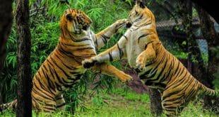 על מלחמת המינים
